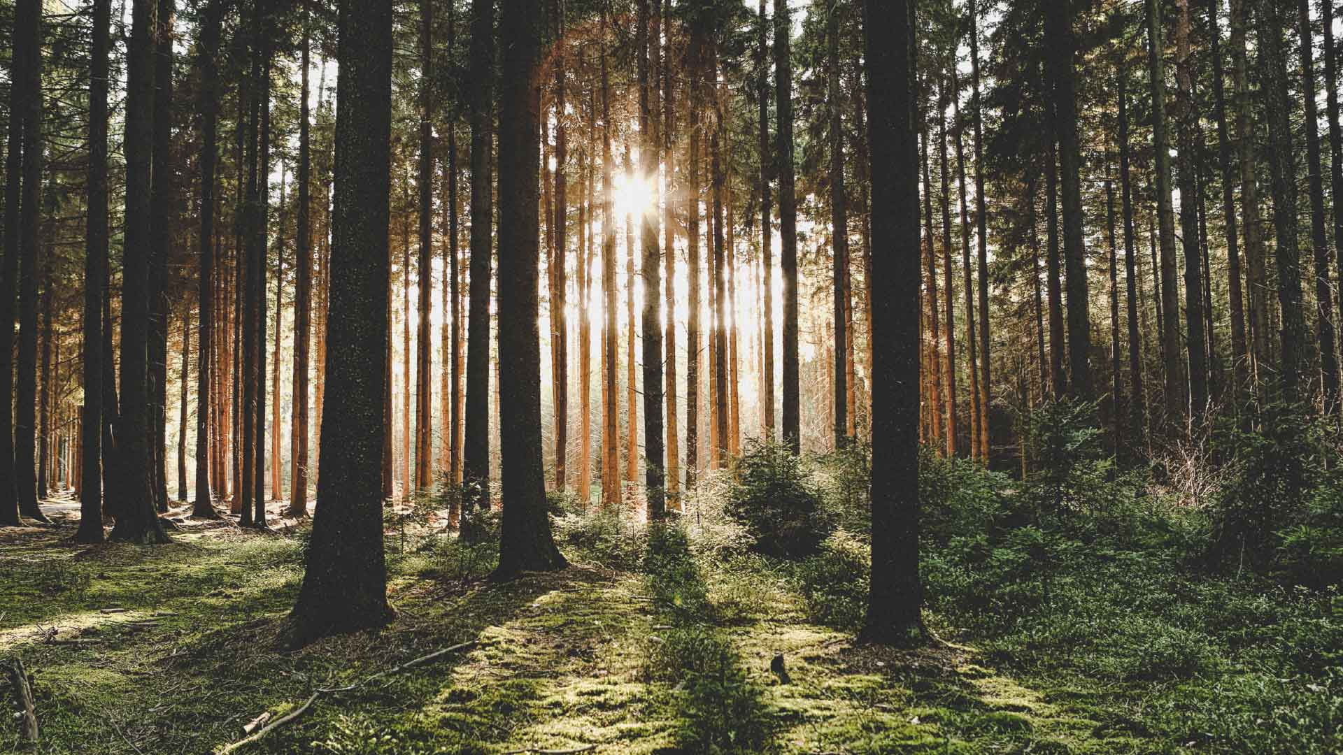 Massivholzbau