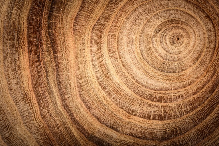 Baustoff Holz: Das Material der Zukunft?
