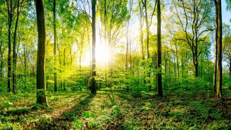 Baustoff Holz: Für eine nachhaltige Zukunft